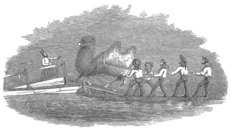 Heap_-_Embarkation_of_Camels
