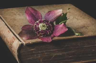 maroon flower on top of brown book